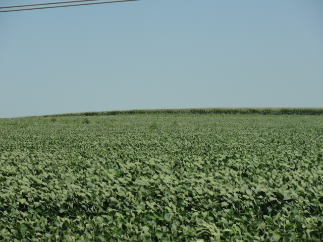 146.46 Acres Irrigated Cropland, West of Humphrey, NE