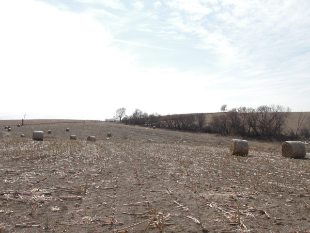 39.44 Acres Dryland Crop Ground, Northeast of Richland, NE