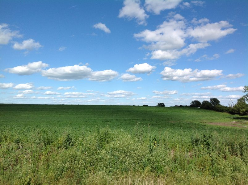 137 Acres Dryland Crop Ground, South of Utica, NE