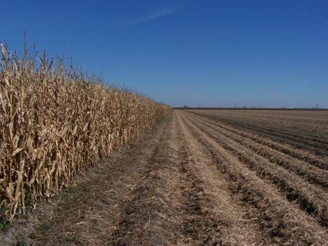 149.97 Acres Irrigated Cropland, South of Worms, NE