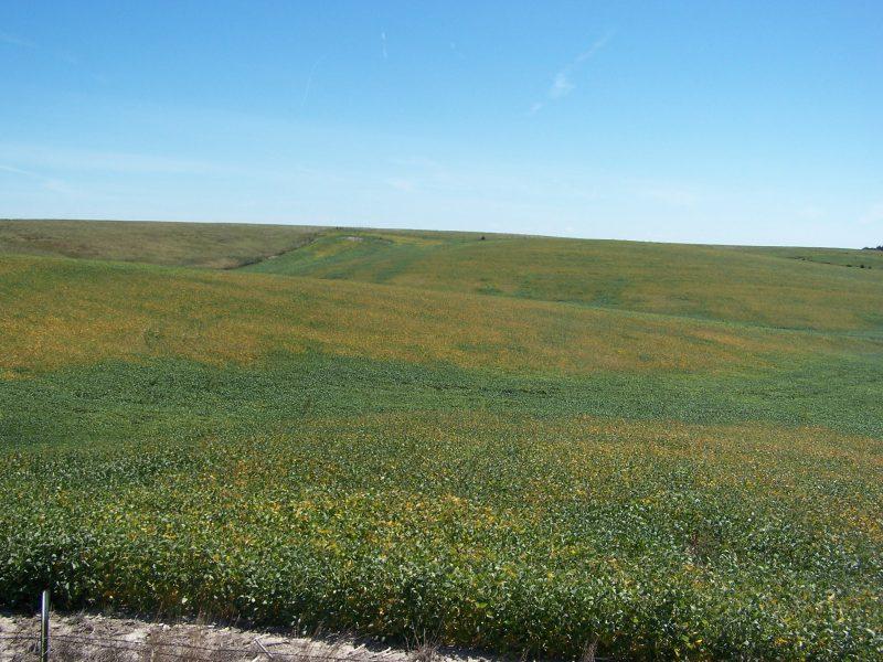 80 Acres Dryland, North of Litchfield, NE
