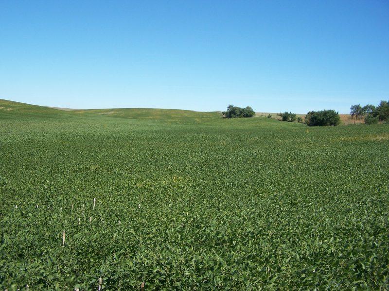 160 Acres Dryland Crop Ground, Southeast of Litchfield, NE