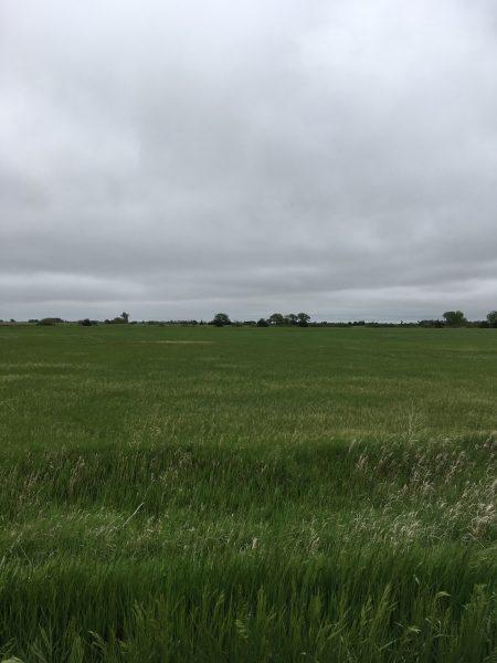 38.79 Acres Hay Meadow, Northwest of Central City, NE