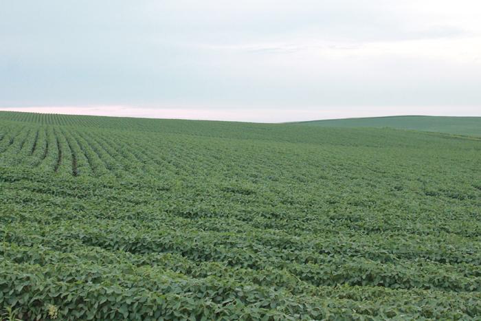 159.41 Acres Dryland Crop Ground, Northwest of Osmond, NE