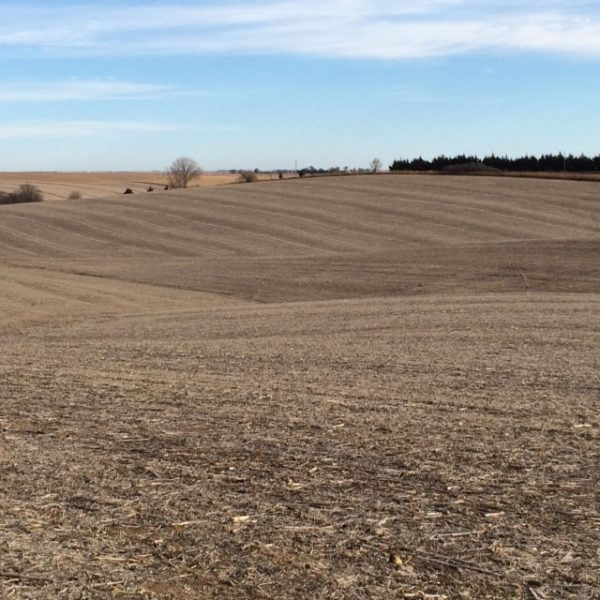 155 Acres Pivot Irrigated Cropland, West of St. Edward, NE