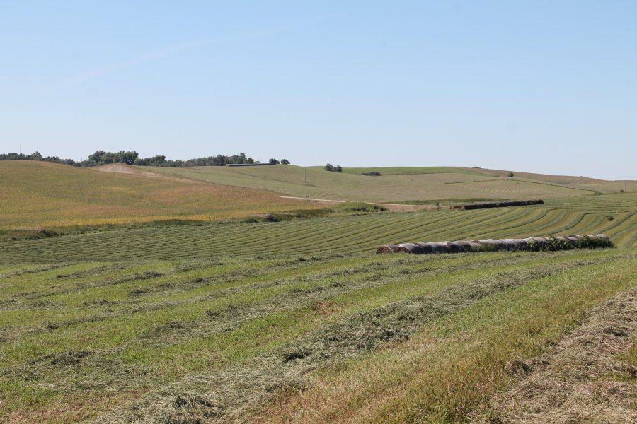 232.66 Acres Dryland Crop Ground, North of Lindy, NE