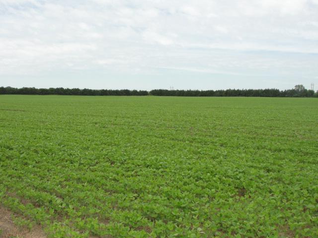 154.15 Acres Pivot Irrigated Crop Ground, North of Battle Creek, NE (tr 14)