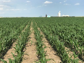 2,129.16+/- Acres Sherman County, KS