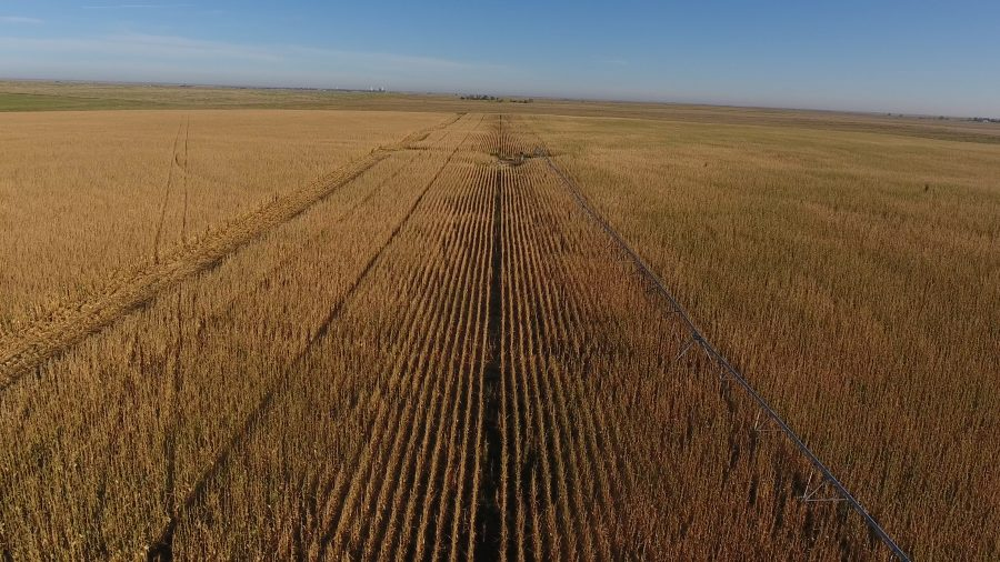 613.9+/- Acres Morton County, KS selling in 2 Tracts