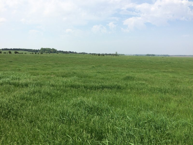 150+/- Acres Pierce County, Northwest of Pierce, NE