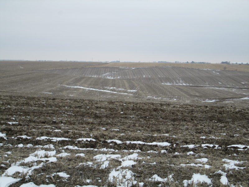 Land Auction 166.7+/- Acres Platte County, Nebraska