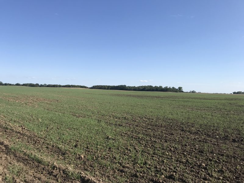 November 21, 2019 Land Auction 156.9+/- Acres Reno County, Kansas