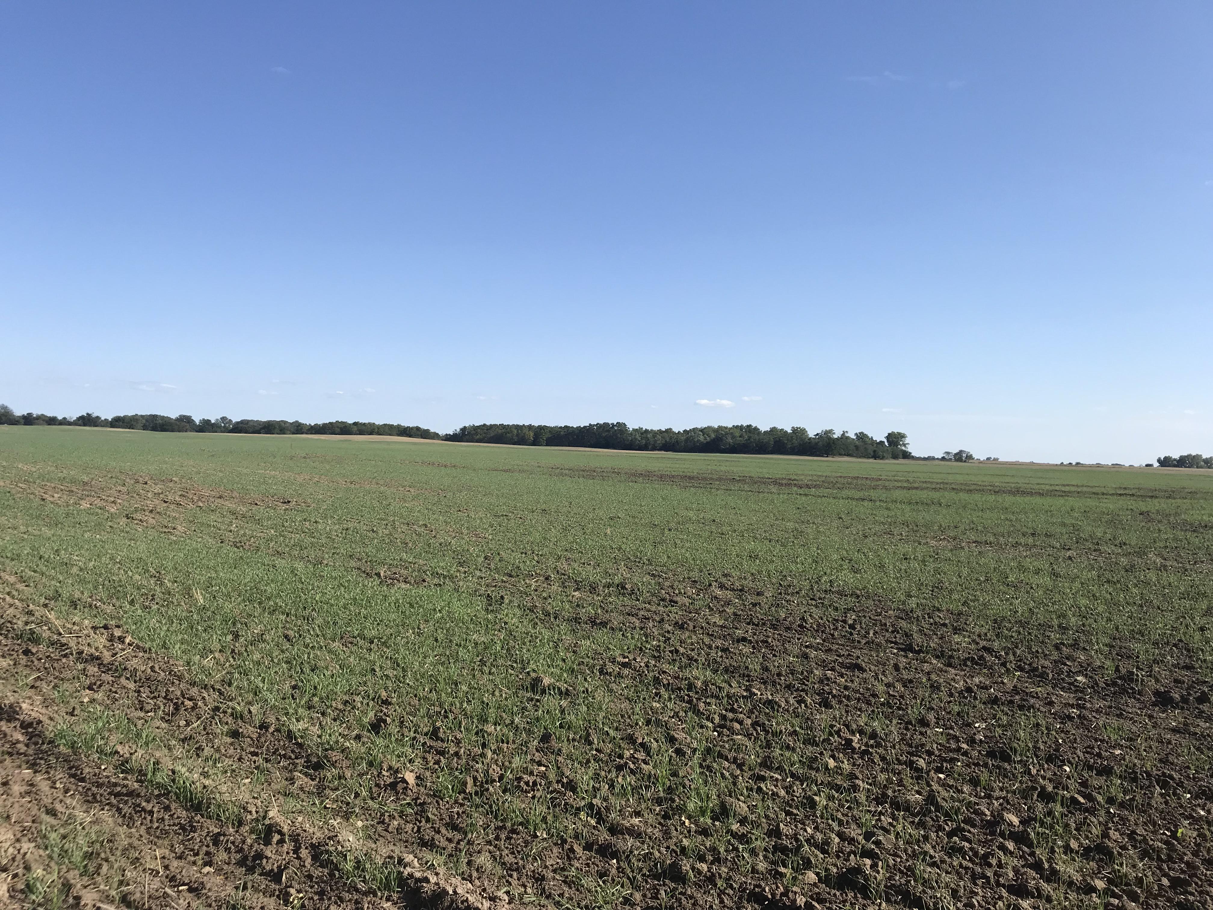 Planted-wheat-10-6-19-1.jpg