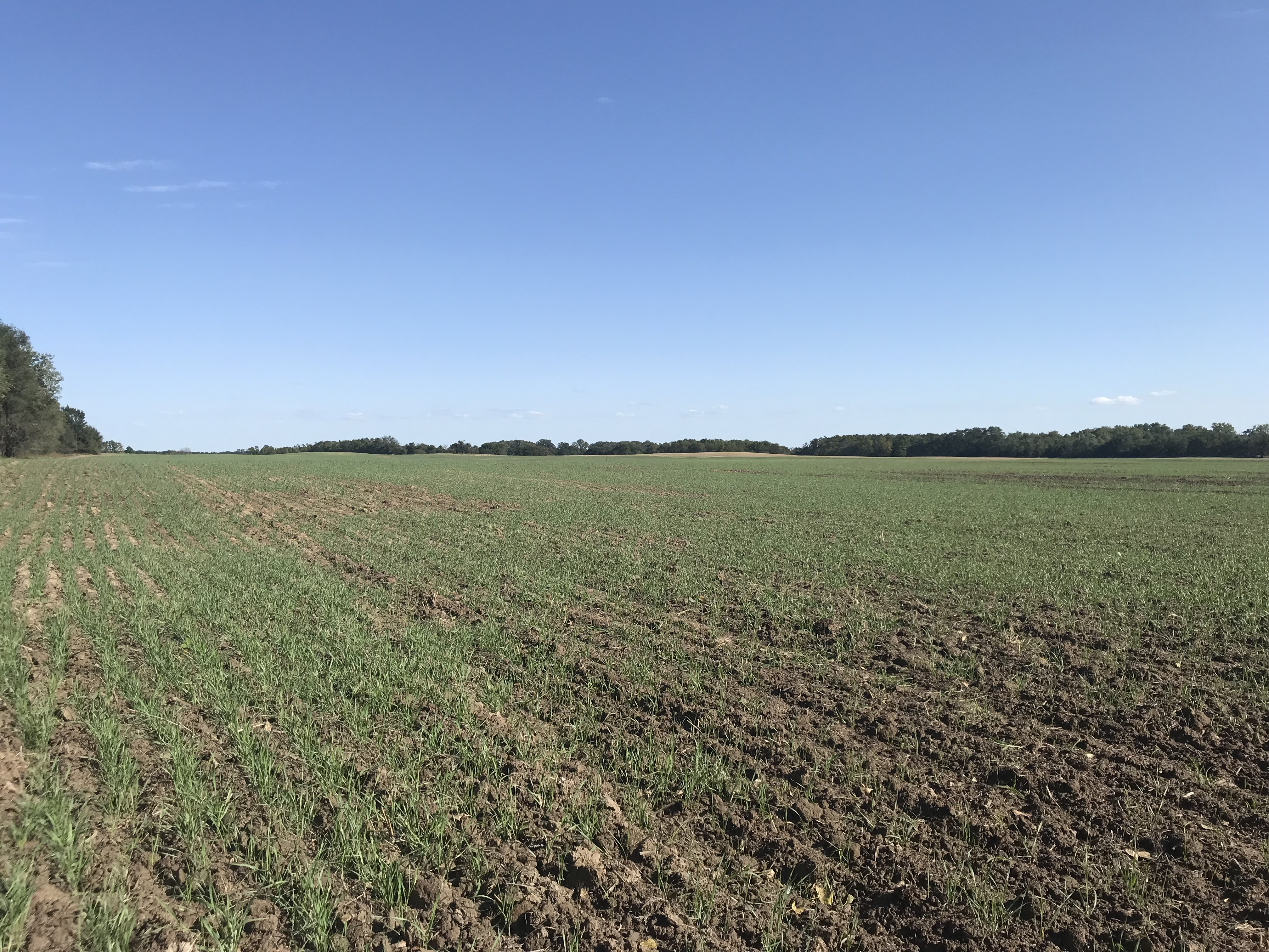 Planted-wheat-10-6-19-2.jpg
