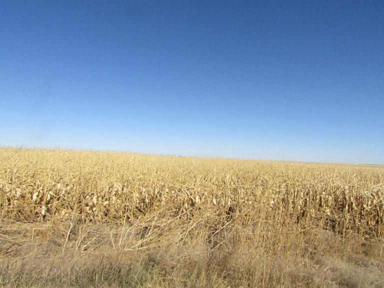 tract-1-corn.jpg