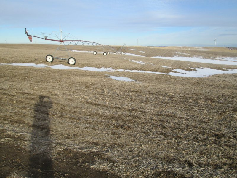 Land Auction 159.74+/- Acres Antelope County, NE