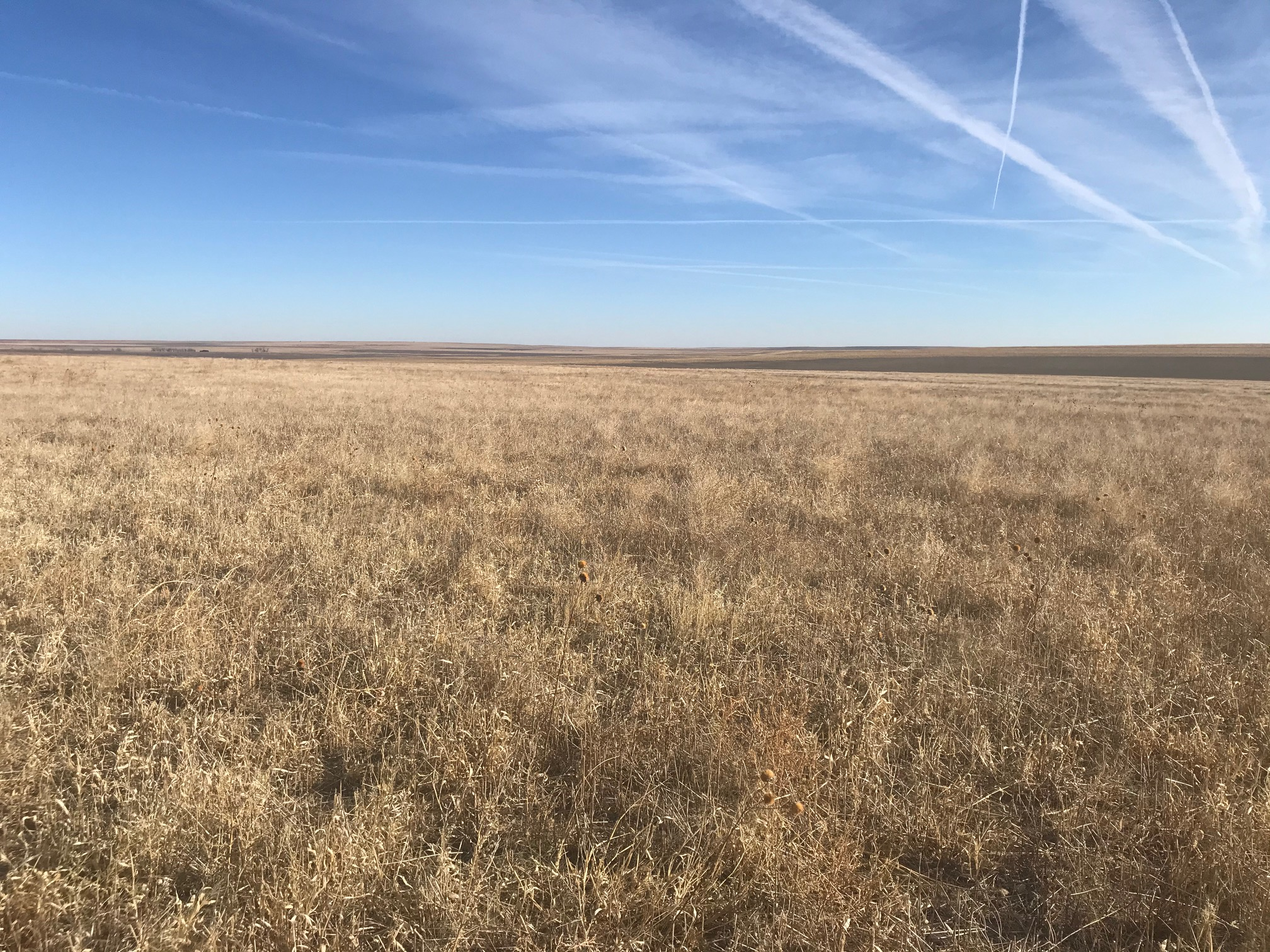 Tract-1-wheat-stubble-south-side-2.jpg