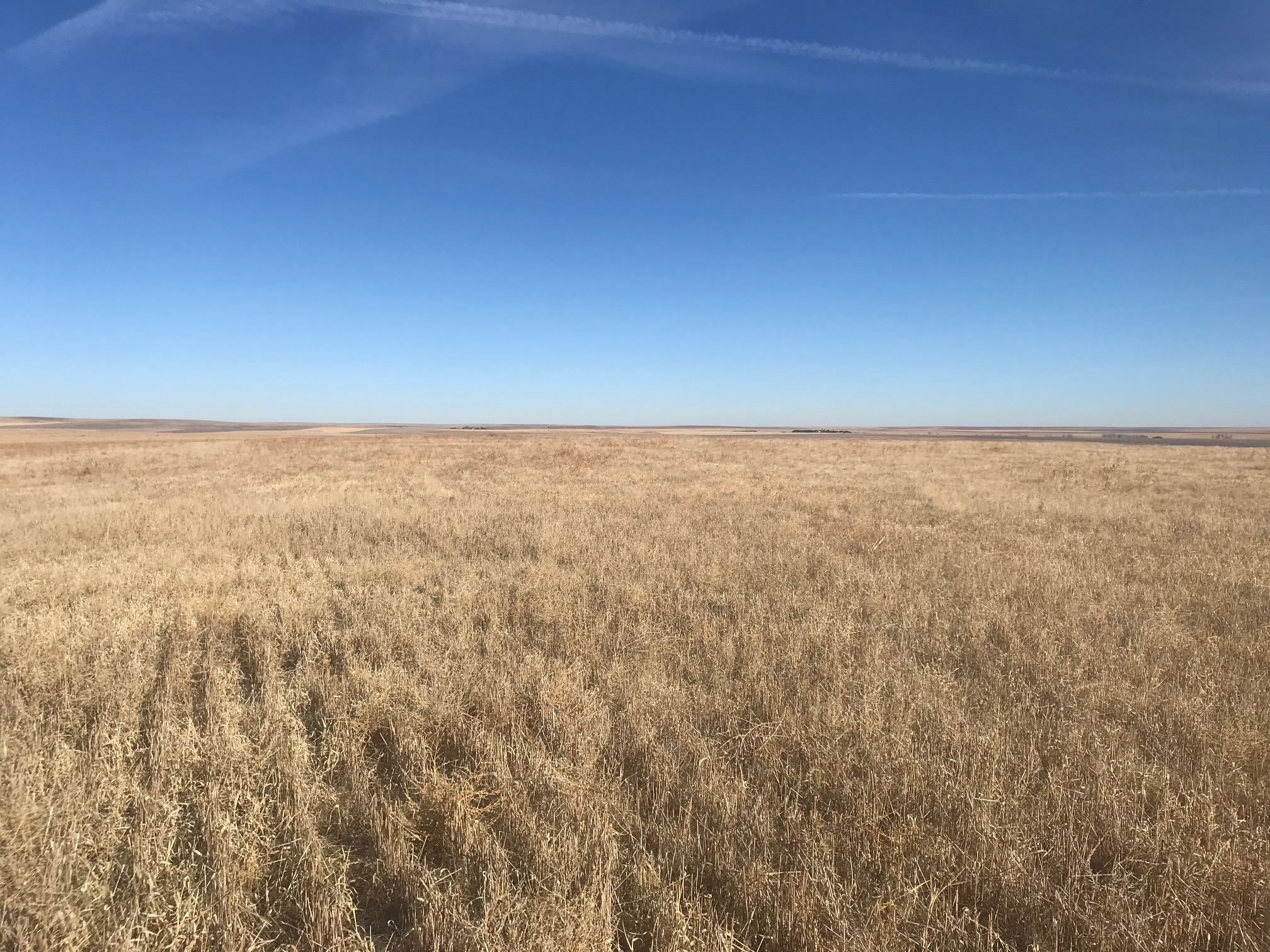 Tract-1-wheat-stubble-south-side-3.jpg