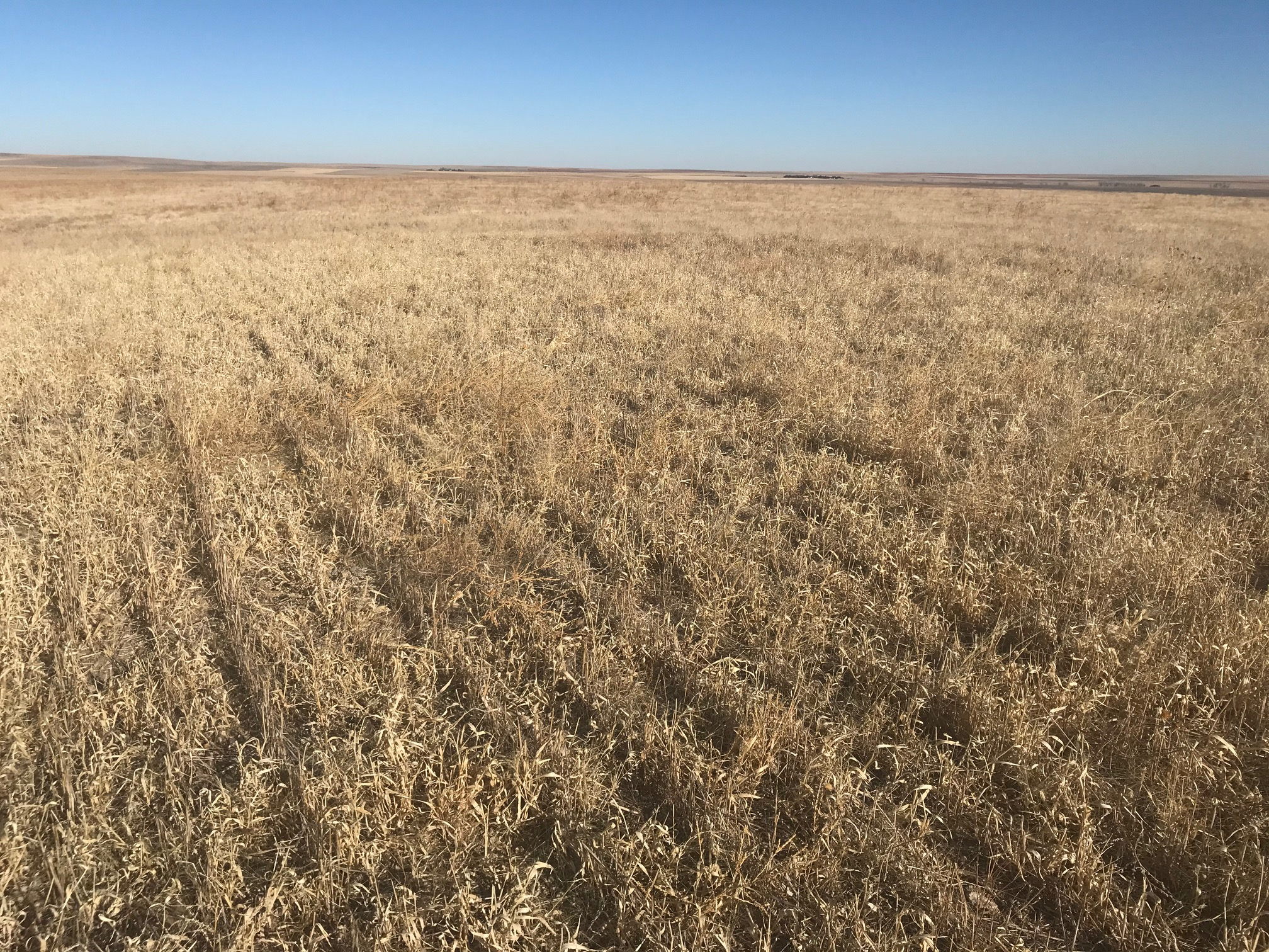 Tract-1-wheat-stubble-south-side.jpg