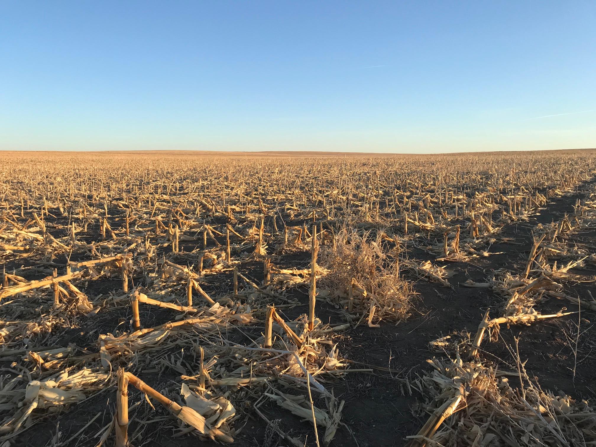 Tract-2-corn-stubble-10.jpg