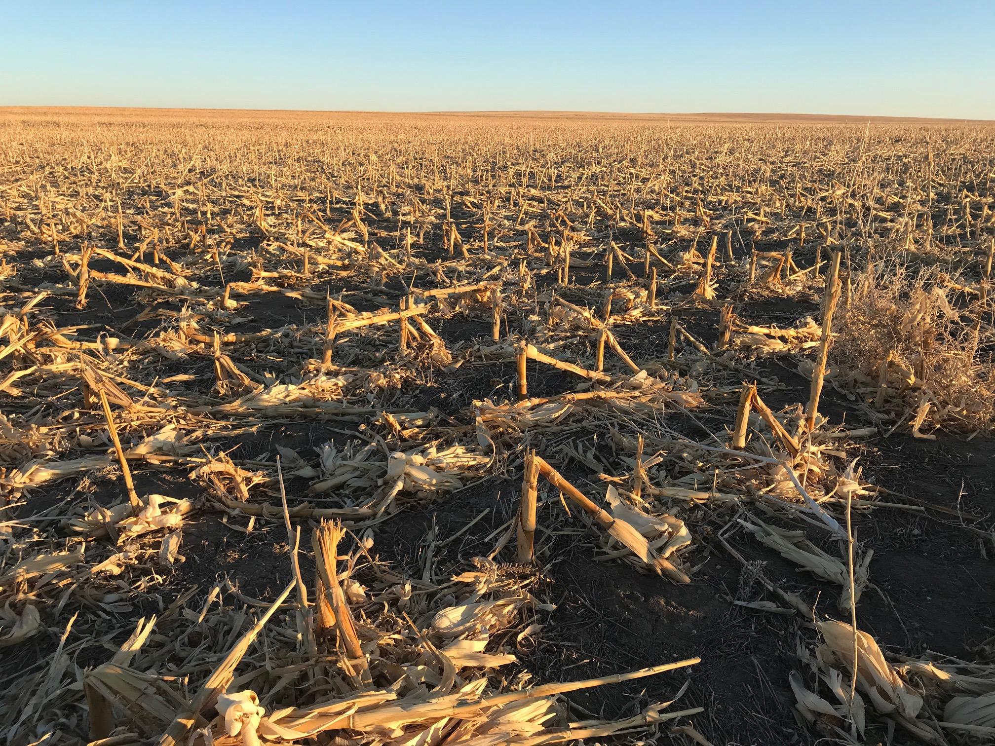 Tract-2-corn-stubble-11.jpg