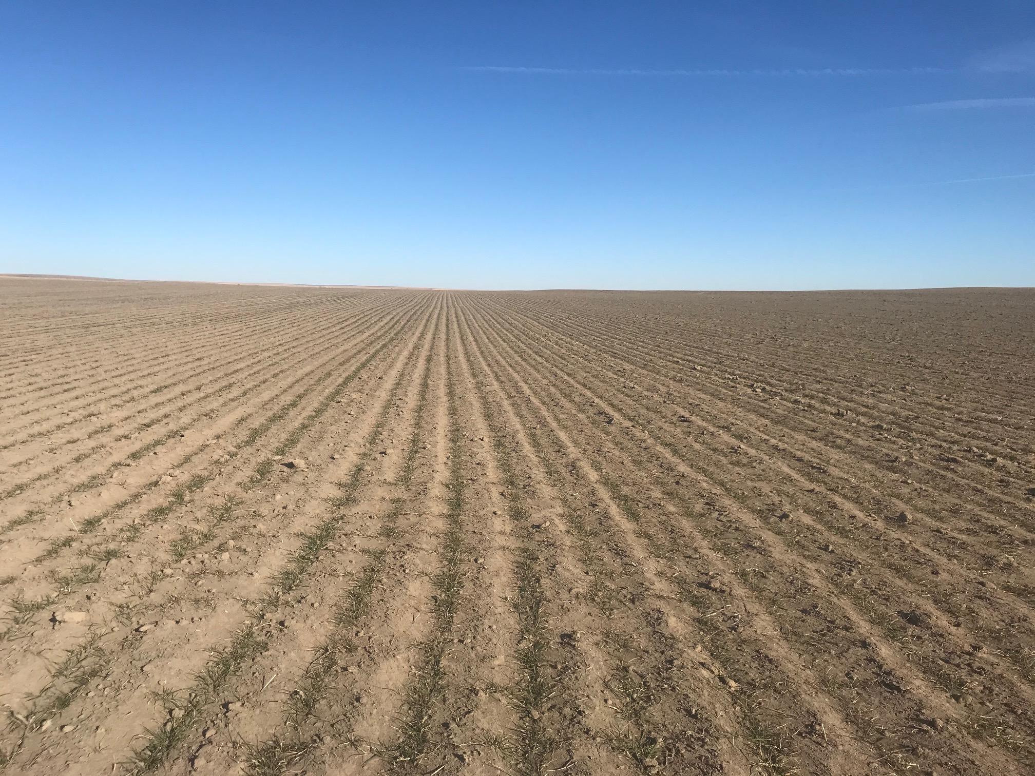 Tract-3-Wheat-2.jpg
