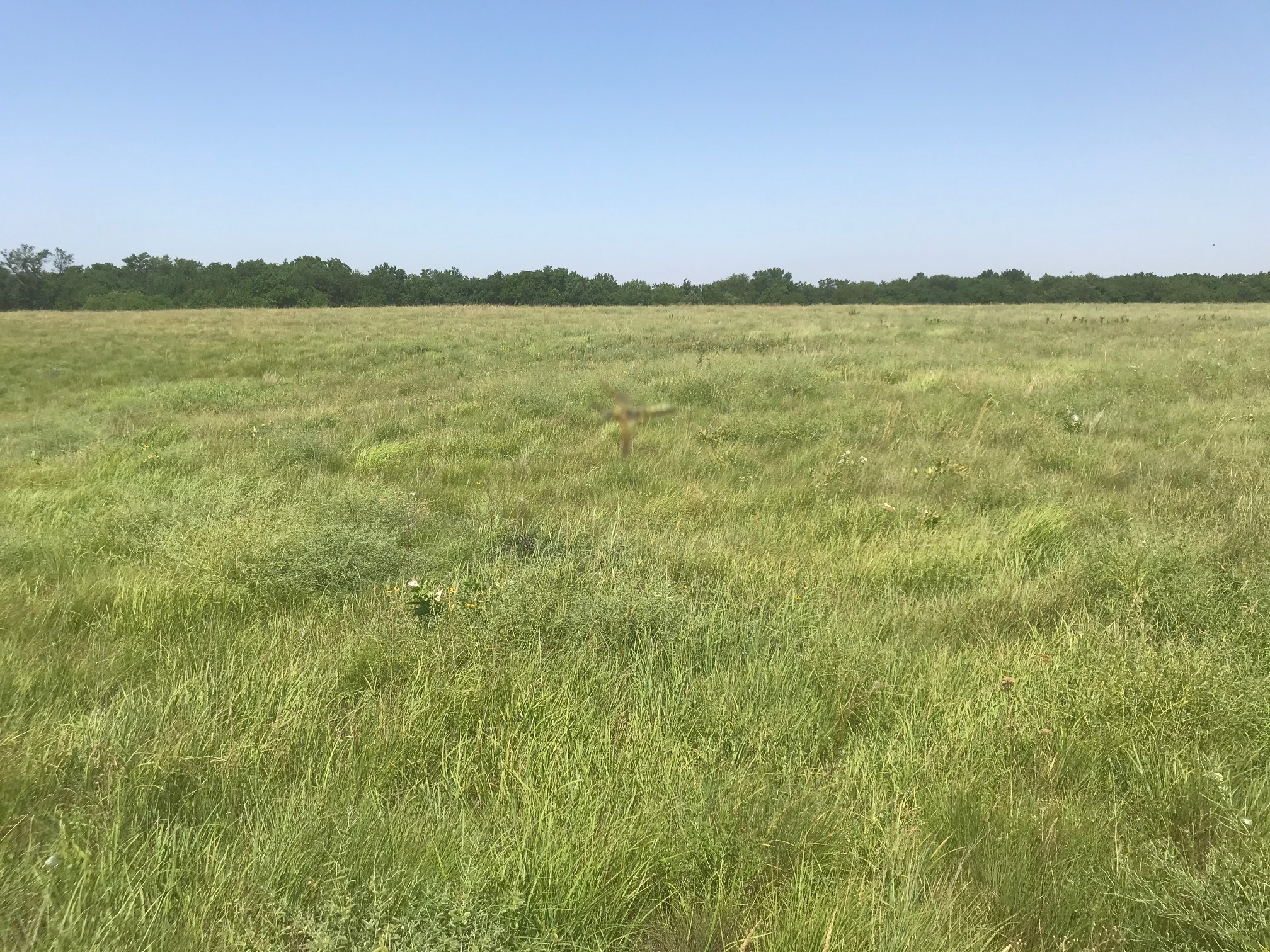 Hay-meadow.jpg