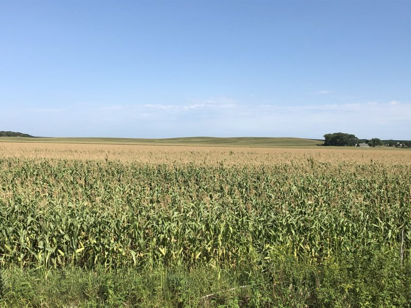 80+/- Acres Madison County, NE