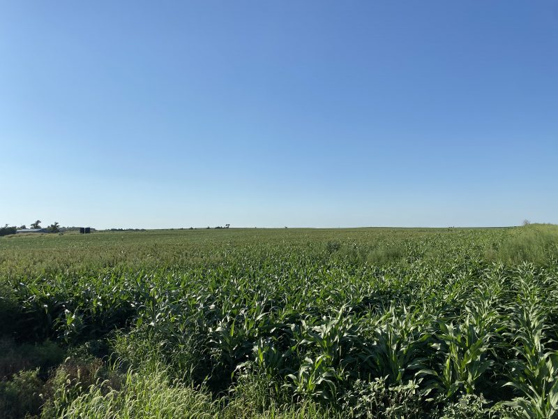 306+/- Acres Rooks County, KS selling in 2 Tracts