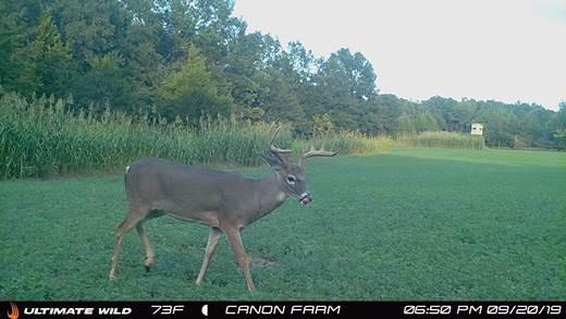 Deer-BIR106-1.jpg