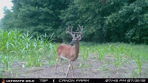 Deer-BIR106-8.jpg