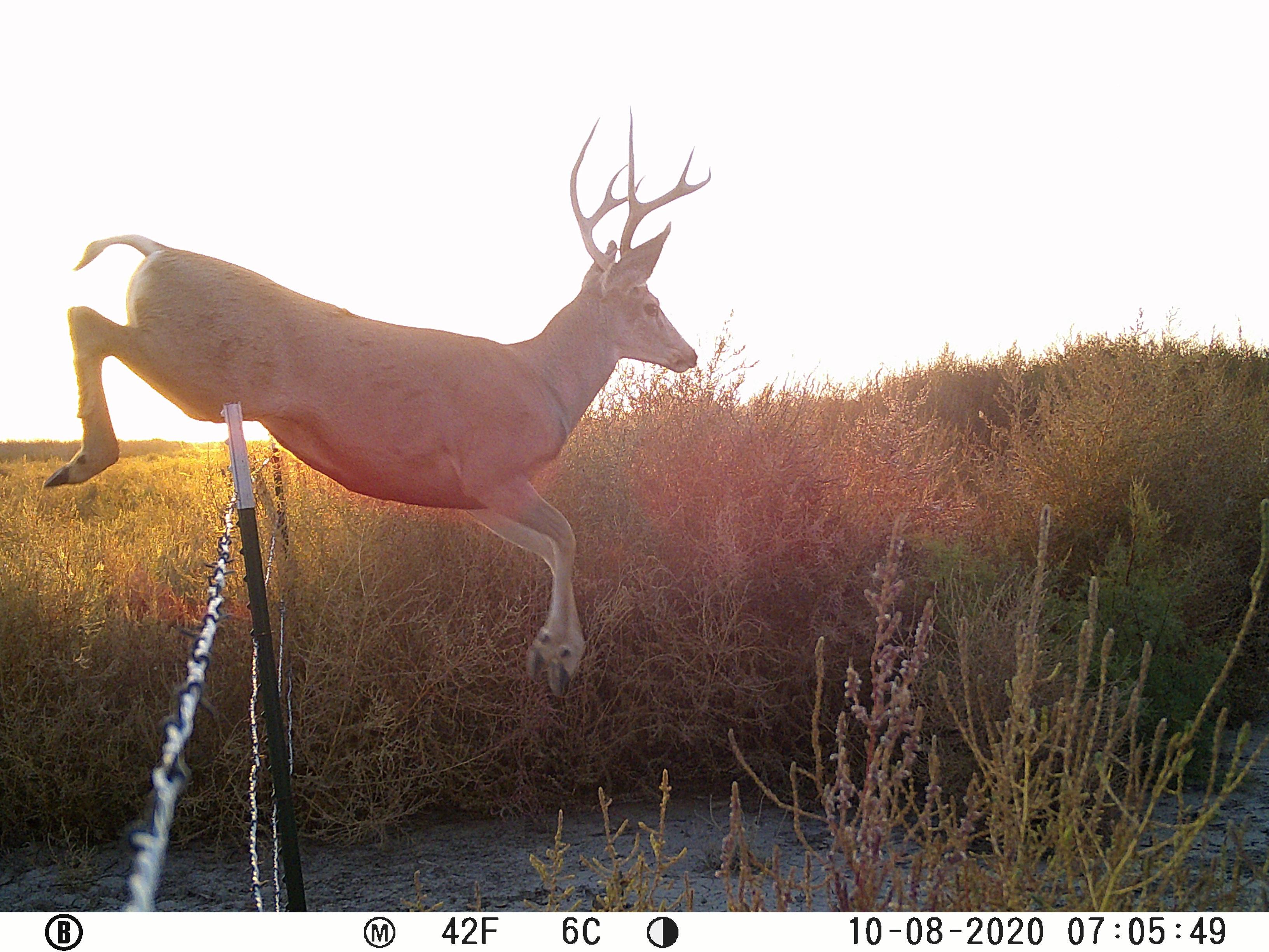 O-J-Deer-1.jpg