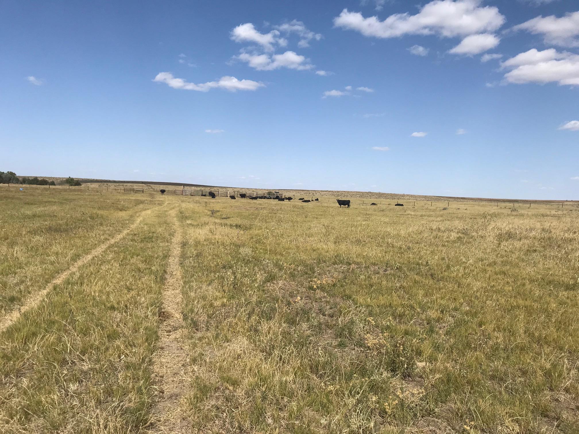 Grass-1-2.jpg