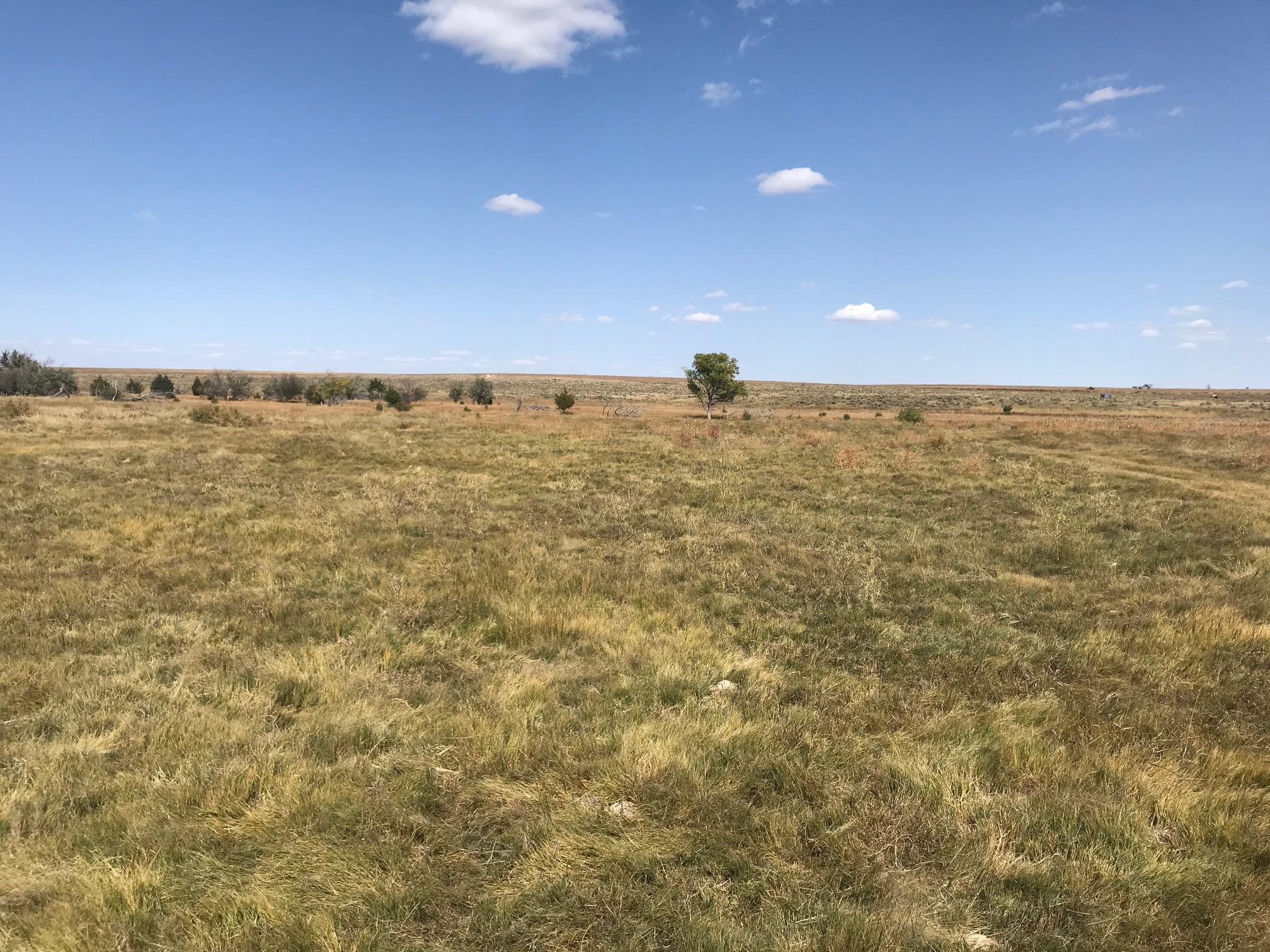 Grass-3-2.jpg