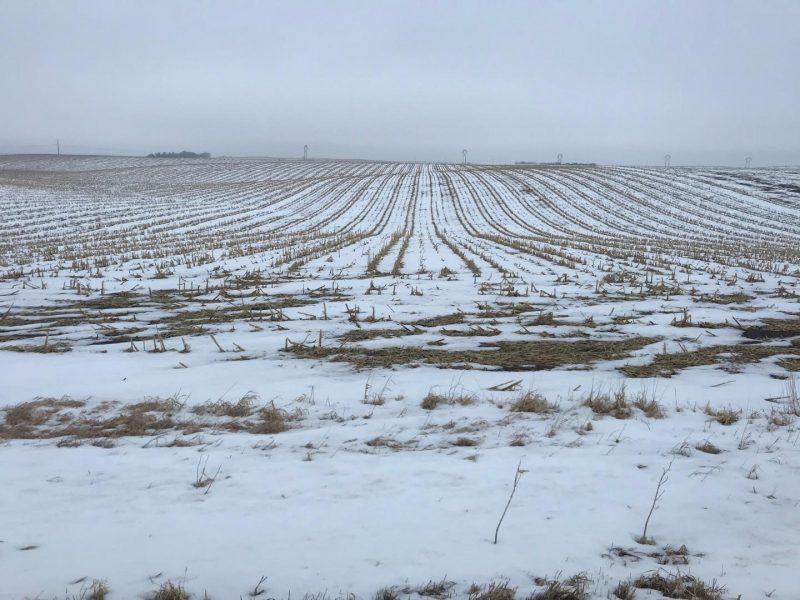 Land Auction 154.33+/- Acres Madison County, NE