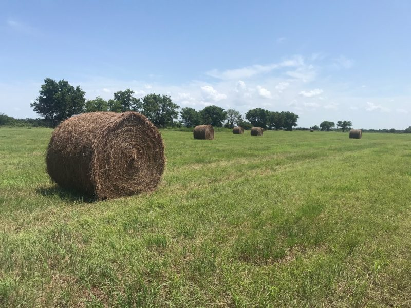 301.0+/- Acres Sumner County, KS