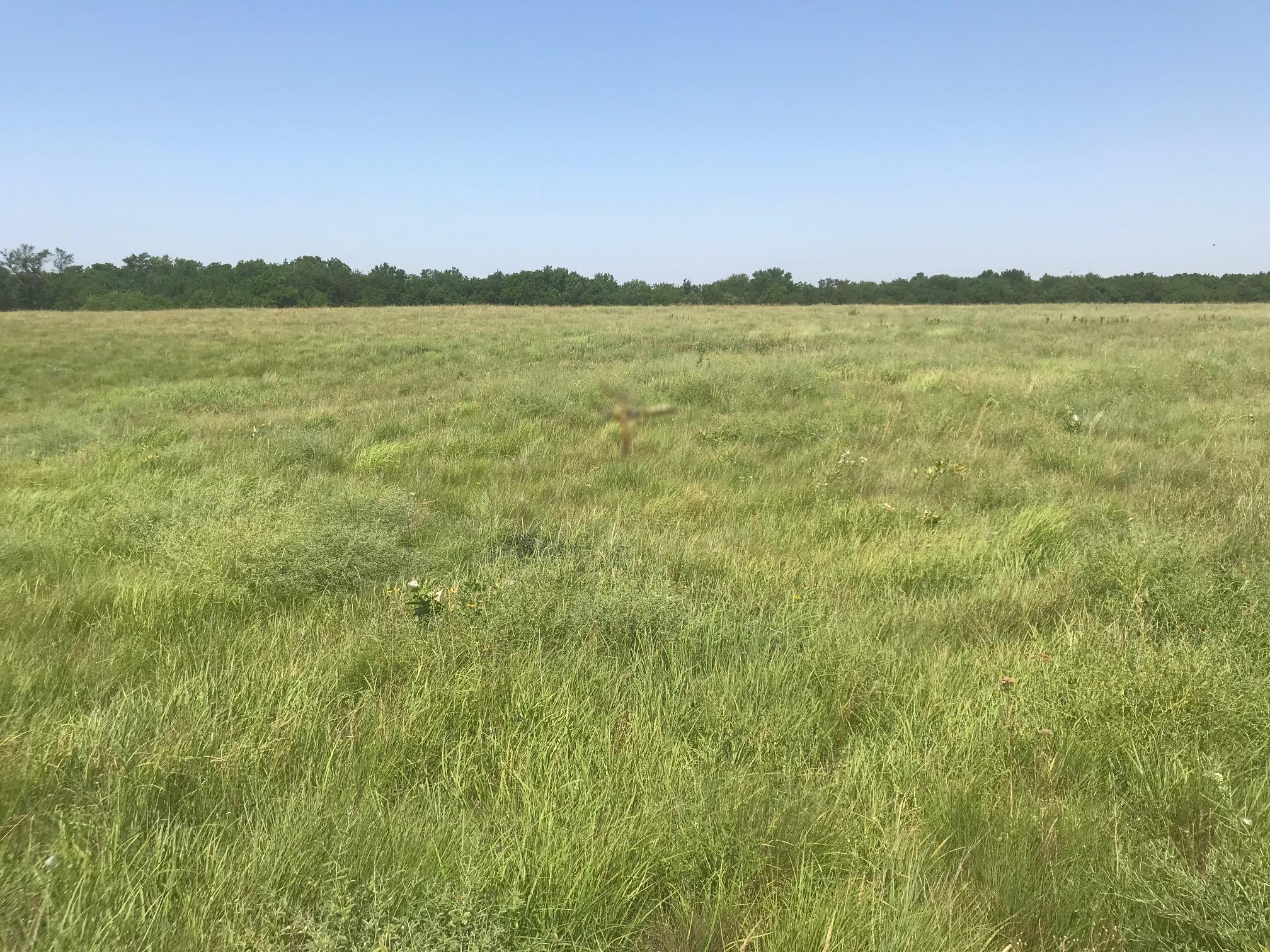 Hay-meadow-BIR1074.jpg