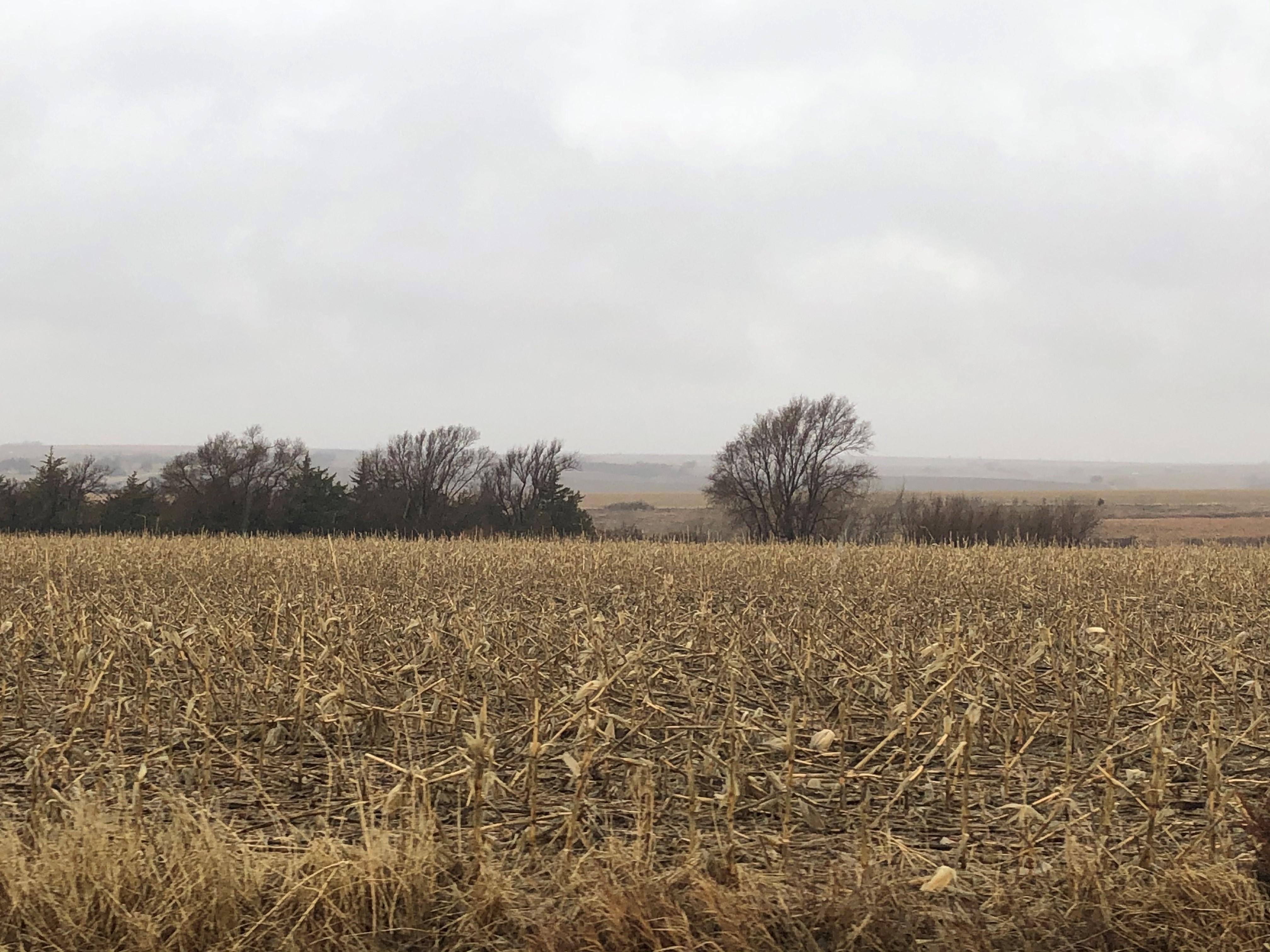 Land-BIR2116-3.jpg
