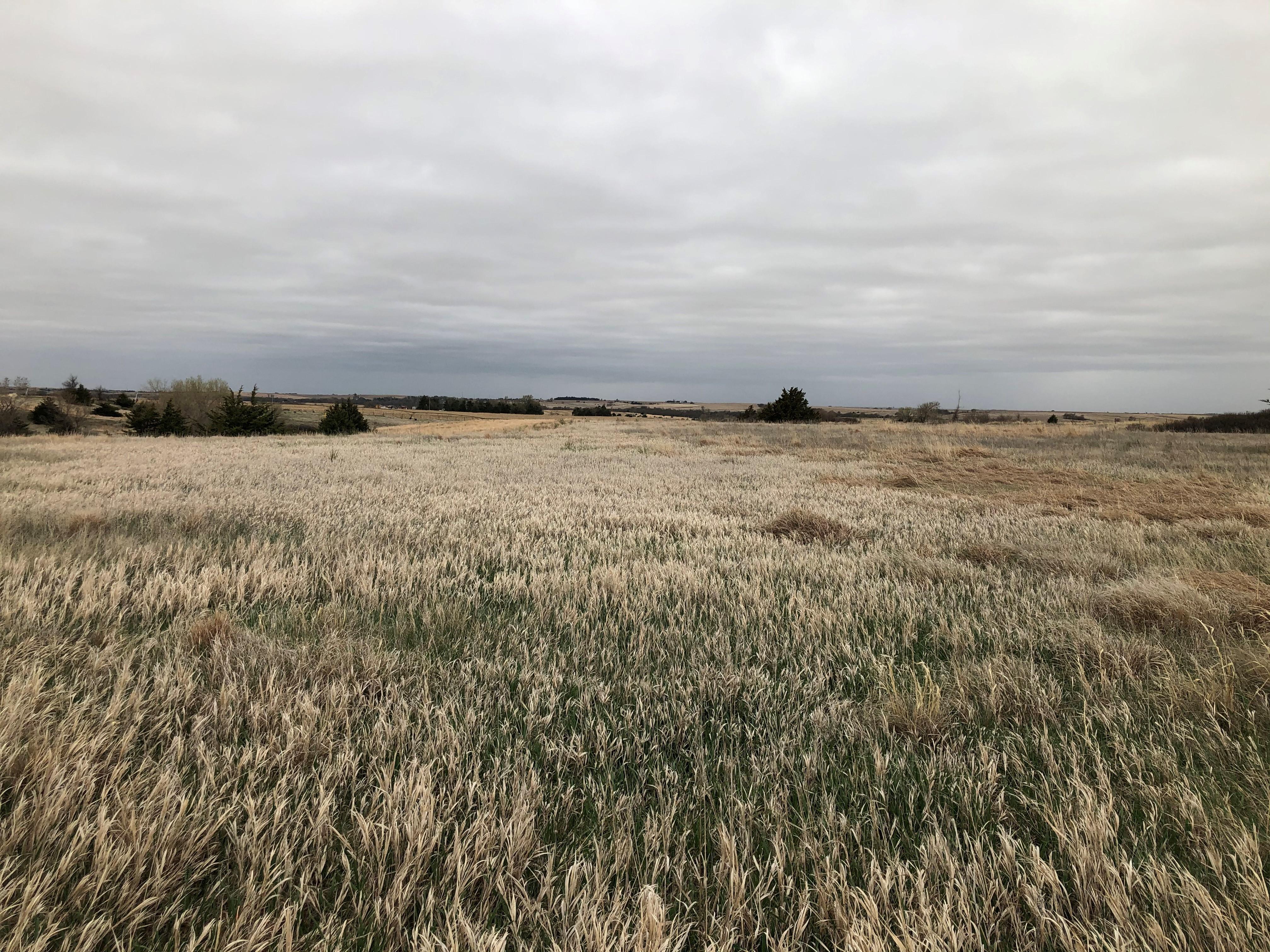 Land-BIR2116-5.jpg