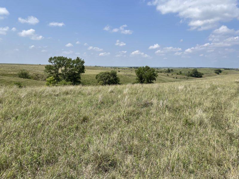 Land Auction 160+/- Acres Howard County, NE